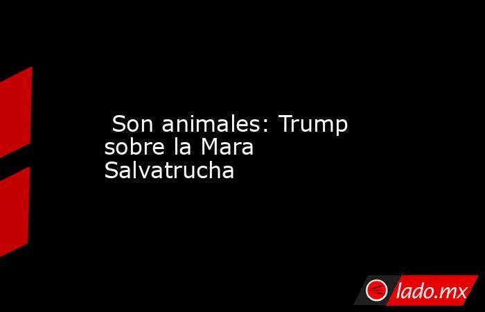 Son animales: Trump sobre la Mara Salvatrucha. Noticias en tiempo real