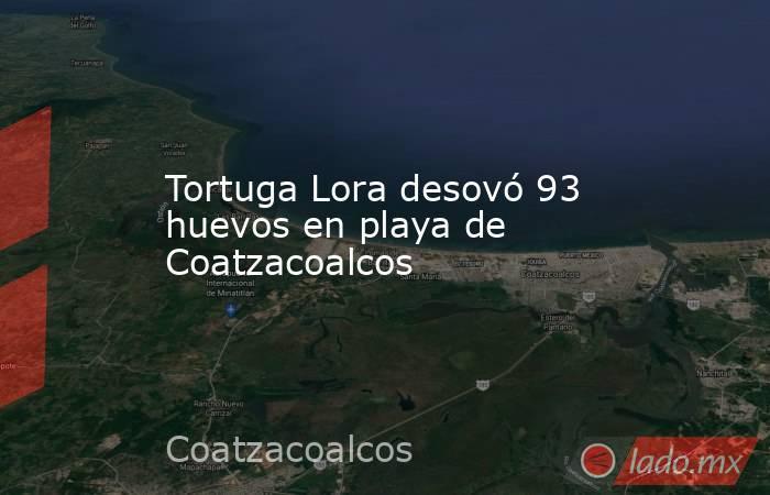 Tortuga Lora desovó 93 huevos en playa de Coatzacoalcos. Noticias en tiempo real