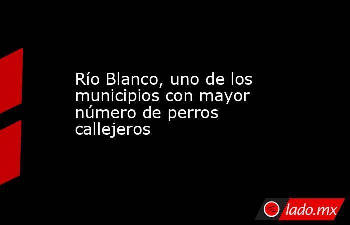 Río Blanco, uno de los municipios con mayor número de perros callejeros. Noticias en tiempo real