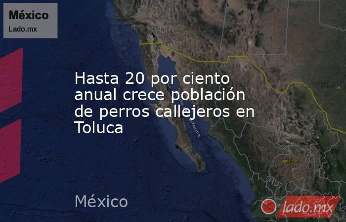 Hasta 20 por ciento anual crece población de perros callejeros en Toluca. Noticias en tiempo real