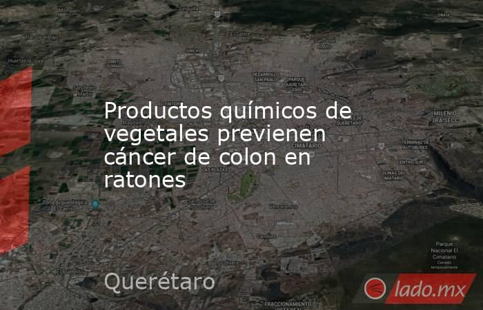 Productos químicos de vegetales previenen cáncer de colon en ratones. Noticias en tiempo real