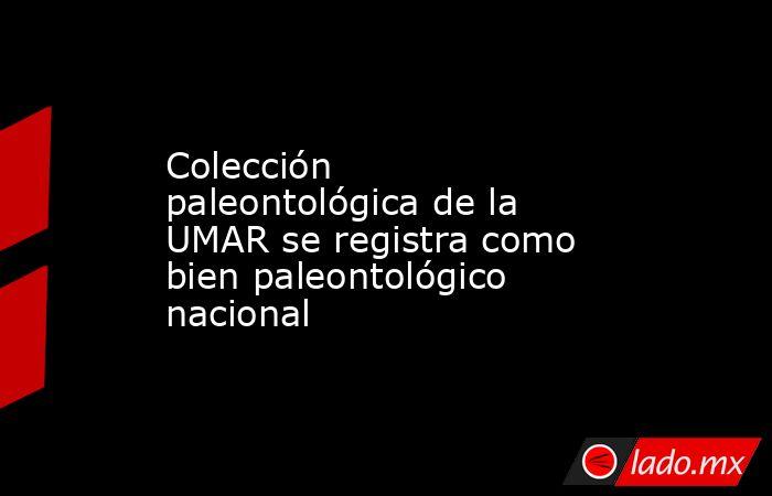 Colección paleontológica de la UMAR se registra como bien paleontológico nacional. Noticias en tiempo real