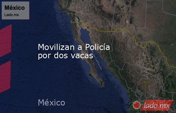 Movilizan a Policía por dos vacas. Noticias en tiempo real