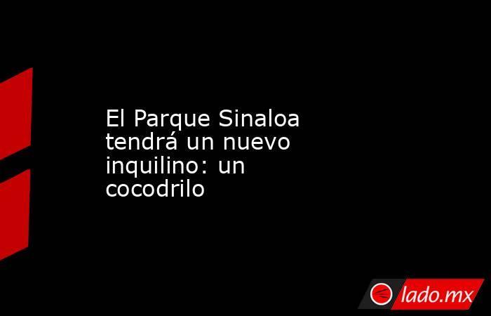 El Parque Sinaloa tendrá un nuevo inquilino: un cocodrilo . Noticias en tiempo real