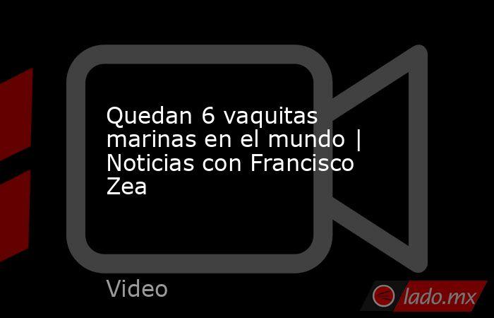Quedan 6 vaquitas marinas en el mundo | Noticias con Francisco Zea. Noticias en tiempo real