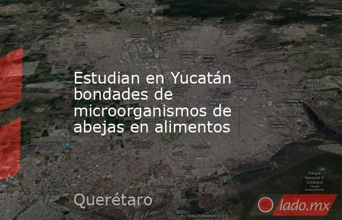 Estudian en Yucatán bondades de microorganismos de abejas en alimentos. Noticias en tiempo real