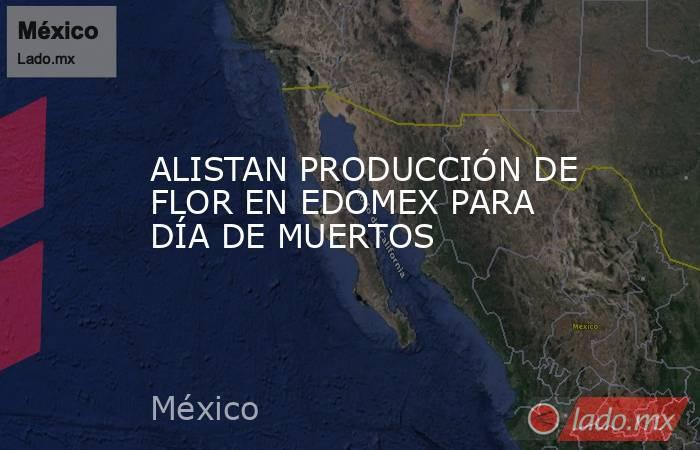 ALISTAN PRODUCCIÓN DE FLOR EN EDOMEX PARA DÍA DE MUERTOS. Noticias en tiempo real