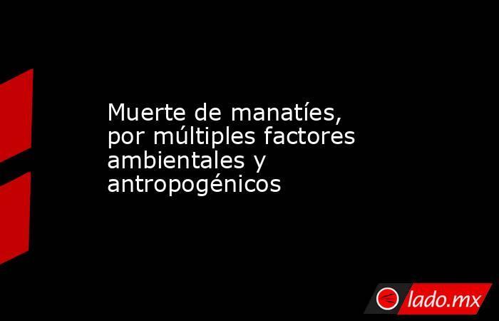 Muerte de manatíes, por múltiples factores ambientales y antropogénicos. Noticias en tiempo real