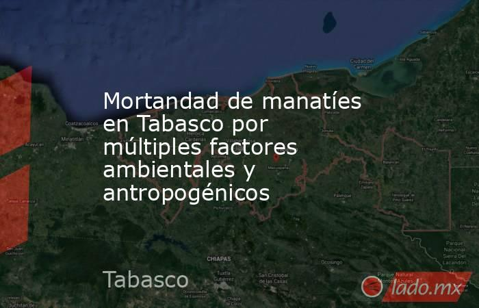 Mortandad de manatíes en Tabasco por múltiples factores ambientales y antropogénicos. Noticias en tiempo real