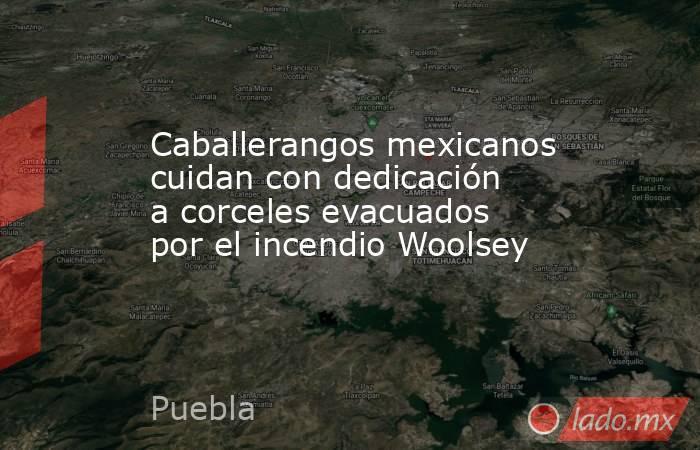 Caballerangos mexicanos cuidan con dedicación a corceles evacuados por el incendio Woolsey. Noticias en tiempo real