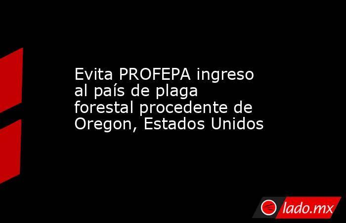 Evita PROFEPA ingreso al país de plaga forestal procedente de Oregon, Estados Unidos. Noticias en tiempo real