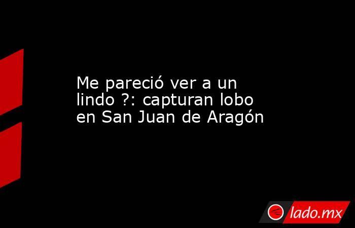 Me pareció ver a un lindo ?: capturan lobo en San Juan de Aragón. Noticias en tiempo real