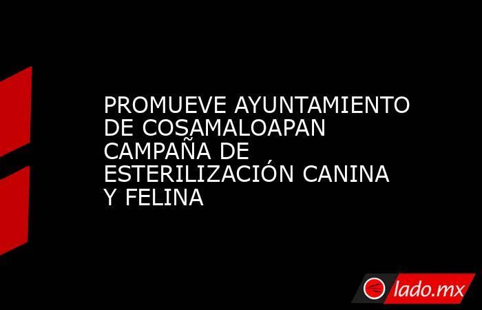 PROMUEVE AYUNTAMIENTO DE COSAMALOAPAN CAMPAÑA DE ESTERILIZACIÓN CANINA Y FELINA. Noticias en tiempo real
