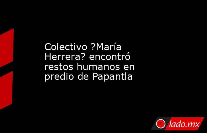 Colectivo ?María Herrera? encontró restos humanos en predio de Papantla. Noticias en tiempo real