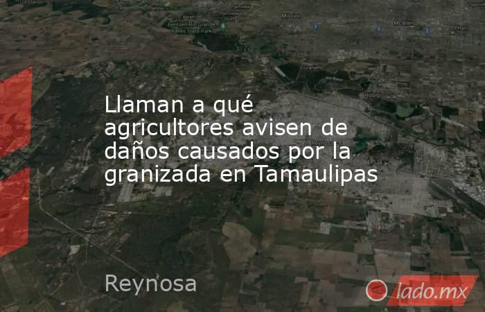 Llaman a qué agricultores avisen de daños causados por la granizada en Tamaulipas. Noticias en tiempo real