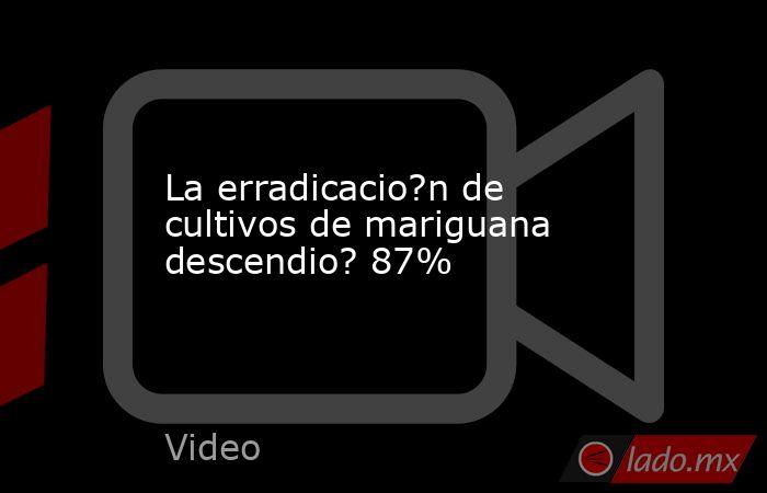 La erradicacio?n de cultivos de mariguana descendio? 87%. Noticias en tiempo real