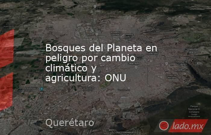 Bosques del Planeta en peligro por cambio climático y agricultura: ONU. Noticias en tiempo real