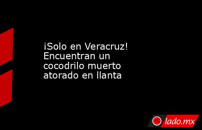 ¡Solo en Veracruz! Encuentranun cocodrilo muerto atorado en llanta . Noticias en tiempo real