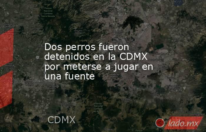 Dos perros fueron detenidos en la CDMX por meterse a jugar en una fuente. Noticias en tiempo real