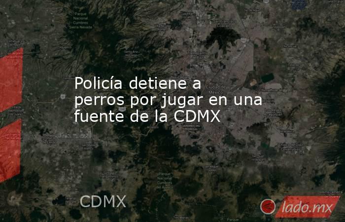 Policía detiene a perros por jugar en una fuente de la CDMX. Noticias en tiempo real