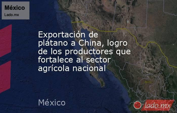 Exportación de plátano a China, logro de los productores que fortalece al sector agrícola nacional. Noticias en tiempo real