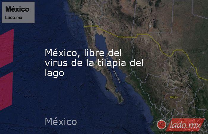 México, libre del virus de la tilapia del lago. Noticias en tiempo real