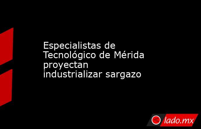 Especialistas de Tecnológico de Mérida proyectan industrializar sargazo. Noticias en tiempo real