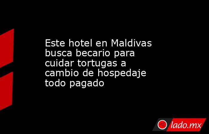 Este hotel en Maldivas busca becario para cuidar tortugas a cambio de hospedaje todo pagado. Noticias en tiempo real