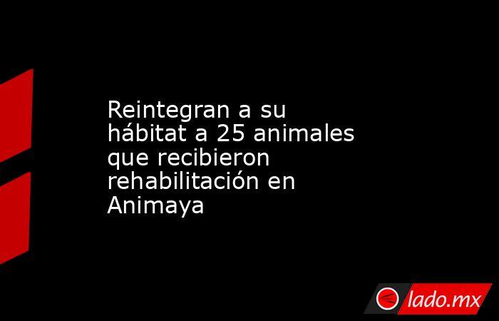 Reintegran a su hábitat a 25 animales que recibieron rehabilitación en Animaya. Noticias en tiempo real