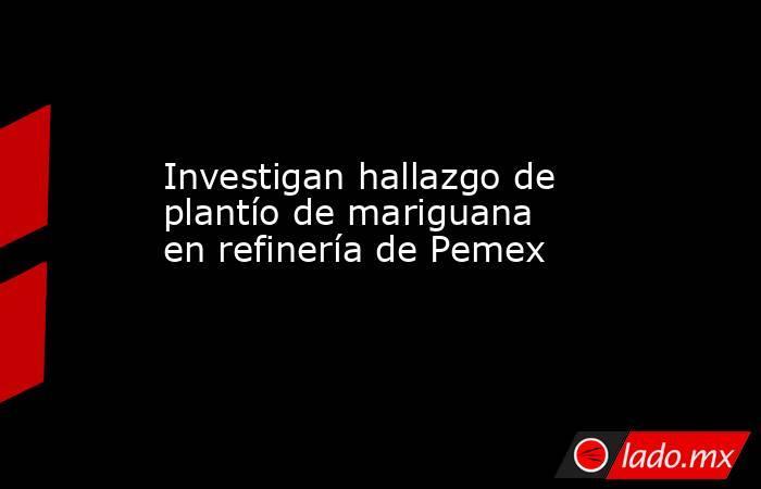 Investigan hallazgo de plantío de mariguana en refinería de Pemex. Noticias en tiempo real