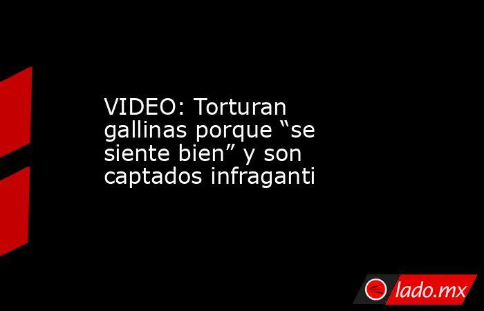 """VIDEO: Torturan gallinas porque """"se siente bien"""" y son captados infraganti. Noticias en tiempo real"""