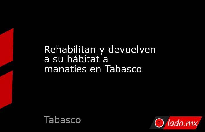 Rehabilitan y devuelven a su hábitat a manatíes en Tabasco. Noticias en tiempo real