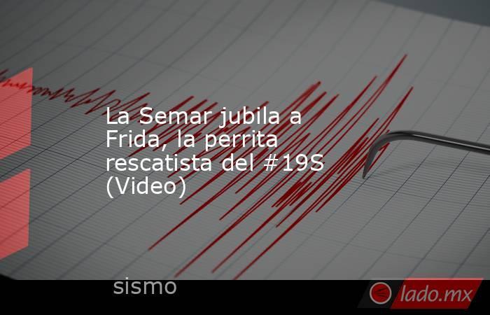 La Semar jubila a Frida, la perrita rescatista del #19S (Video). Noticias en tiempo real