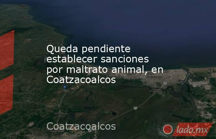 Queda pendiente establecer sanciones por maltrato animal, en Coatzacoalcos. Noticias en tiempo real