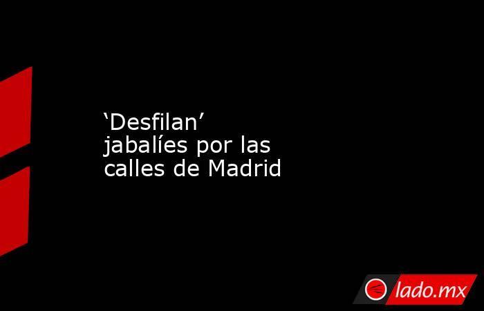 'Desfilan' jabalíes por las calles de Madrid. Noticias en tiempo real