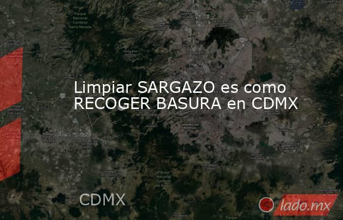 Limpiar SARGAZO es como RECOGER BASURA en CDMX. Noticias en tiempo real