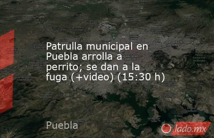 Patrulla municipal en Puebla arrolla a perrito; se dan a la fuga (+video) (15:30 h). Noticias en tiempo real
