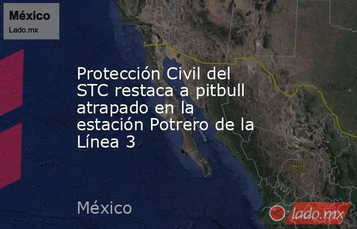 Protección Civil del STC restaca a pitbull atrapado en la estación Potrero de la Línea 3. Noticias en tiempo real