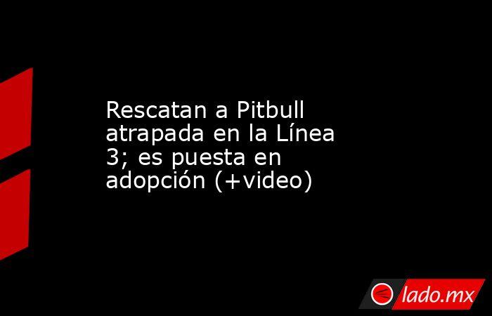 Rescatan a Pitbull atrapada en la Línea 3; es puesta en adopción (+video). Noticias en tiempo real