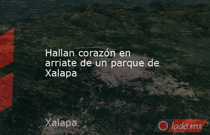 Hallan corazón en arriate de un parque de Xalapa. Noticias en tiempo real