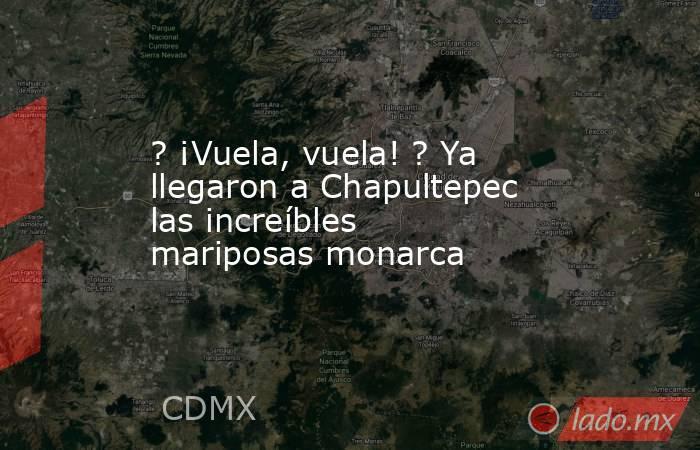 ? ¡Vuela, vuela! ? Ya llegaron a Chapultepec las increíbles mariposas monarca. Noticias en tiempo real
