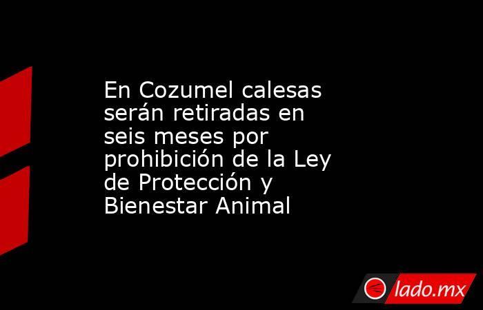 En Cozumel calesas serán retiradas en seis meses por prohibición de la Ley de Protección y Bienestar Animal. Noticias en tiempo real