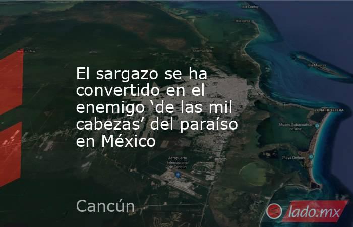 El sargazo se ha convertido en el enemigo 'de las mil cabezas' del paraíso en México. Noticias en tiempo real
