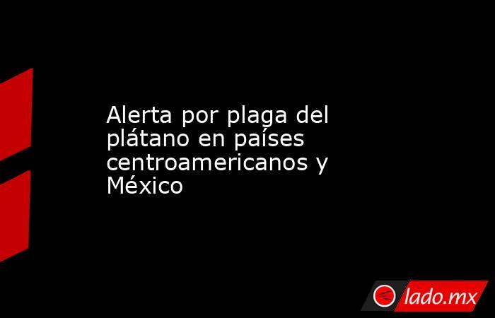 Alerta por plaga del plátano en países centroamericanos y México. Noticias en tiempo real