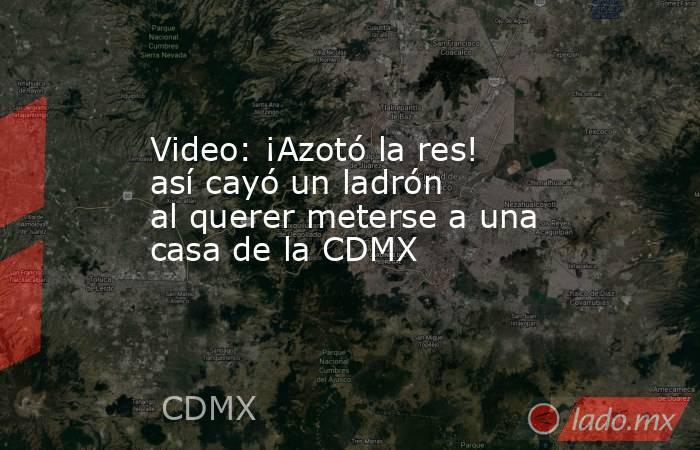 Video: ¡Azotó la res! así cayó un ladrón al querer meterse a una casa de la CDMX. Noticias en tiempo real