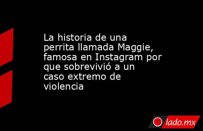 La historia de una perrita llamada Maggie, famosa en Instagram por que sobrevivió a un caso extremo de violencia. Noticias en tiempo real
