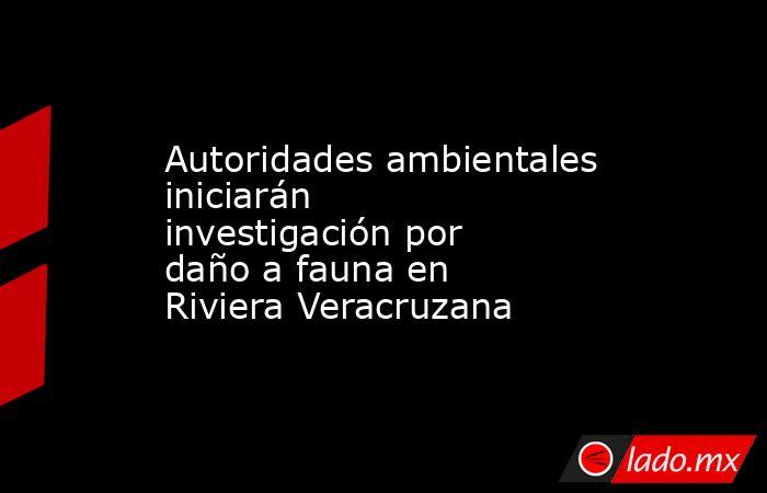 Autoridades ambientales iniciarán investigación por daño a fauna en Riviera Veracruzana. Noticias en tiempo real