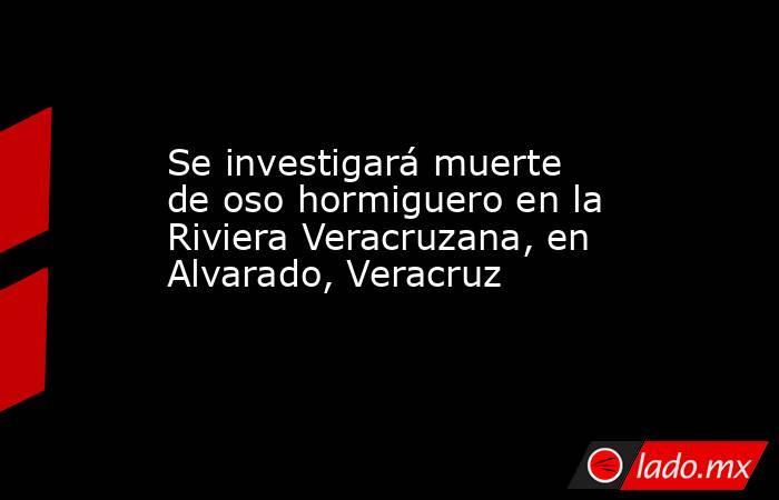 Se investigará muerte de oso hormiguero en la Riviera Veracruzana, en Alvarado, Veracruz. Noticias en tiempo real