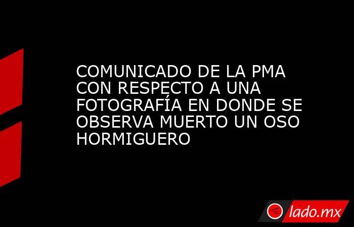 COMUNICADO DE LA PMA CON RESPECTO A UNA FOTOGRAFÍA EN DONDE SE OBSERVA MUERTO UN OSO HORMIGUERO. Noticias en tiempo real