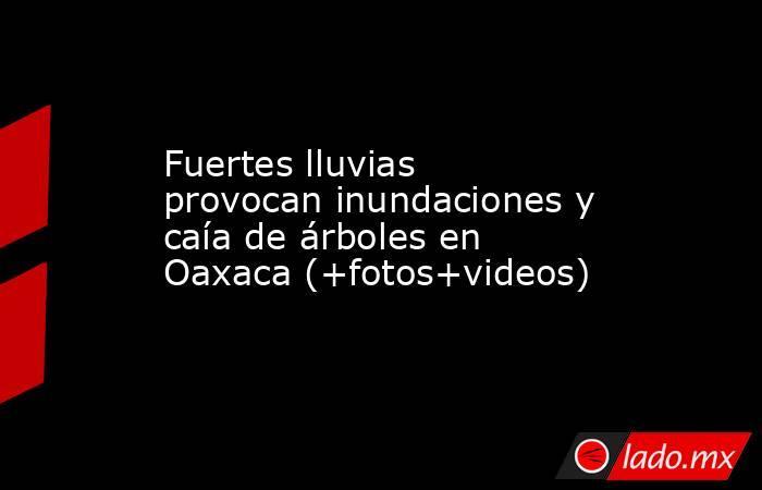 Fuertes lluvias provocan inundaciones y caía de árboles en Oaxaca (+fotos+videos). Noticias en tiempo real